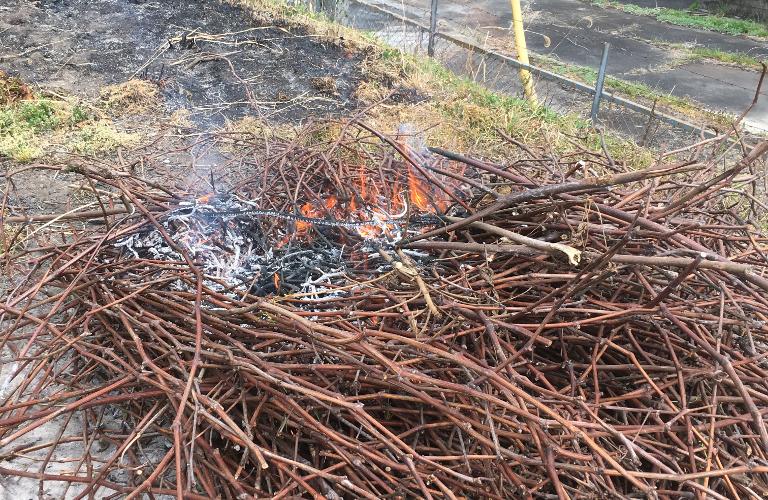 剪定した枝。たき火と焼き芋。