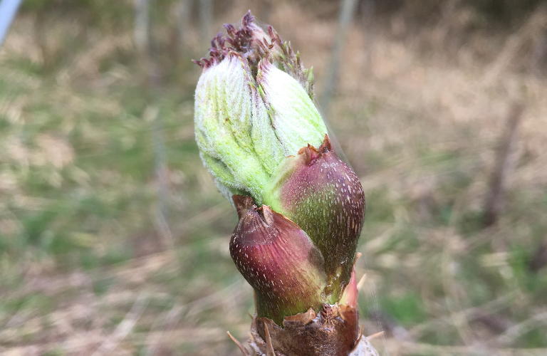 春。たらの芽とたけのこ。